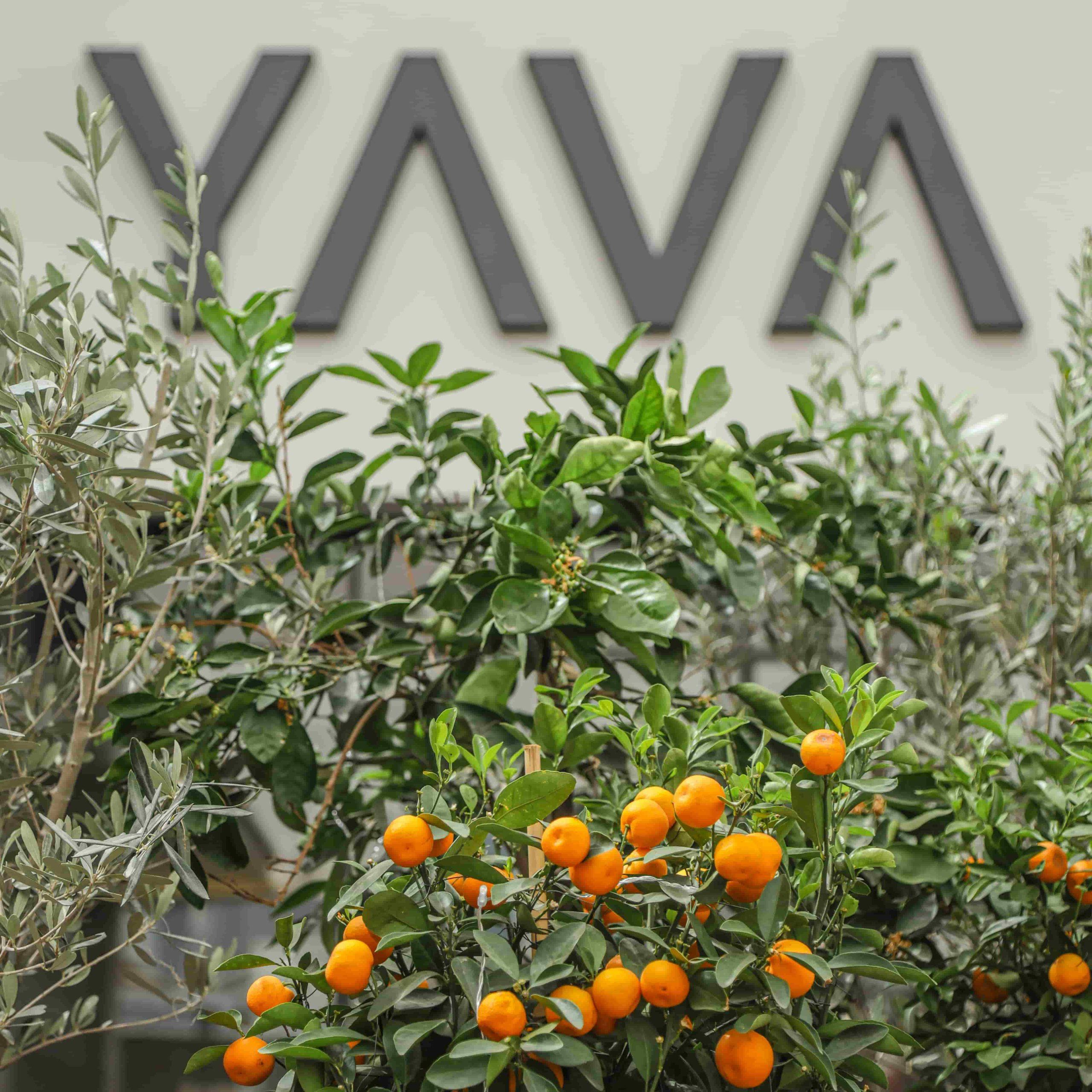 YAVA Wasl 51